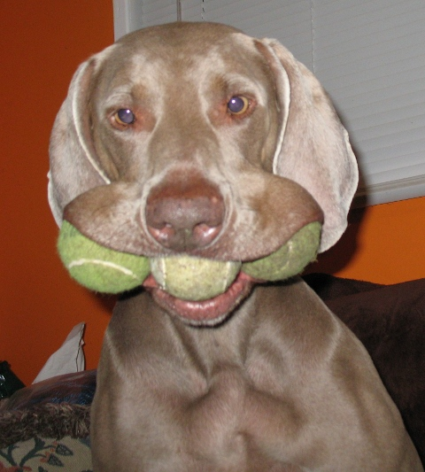 Dieta with three tennis balls